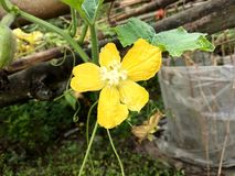 Cudowna kwiat tapeta fotografia stock
