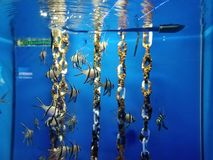 cudowna ryba zdjęcia stock
