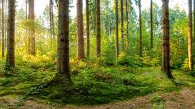 Cudowna scena w lesie w ?wietle ranku s?o?ca fotografia stock