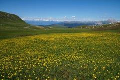 Cudowna zielona łąka i kwiaty na alp w górach Zdjęcia Stock