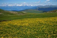 Cudowna zielona łąka i kwiaty na alp w górach Zdjęcie Royalty Free