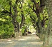 Cudownego krajobrazu, Mekong delta, rząd drzewo obraz stock