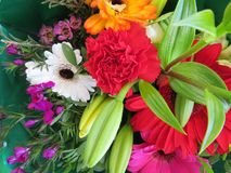 Cudowni kwiaty z kolorem w ten spos?b dobrymi odorem i obraz royalty free
