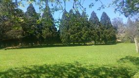 cudowni ogródy Od madery Zdjęcie Royalty Free