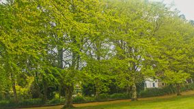 cudowni ogródy Od madery Obrazy Royalty Free