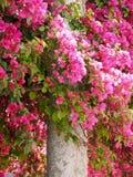 Cudowni r??owi kwitn?cy azalia kwiaty fotografia stock