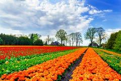 Cudowni tulipany i fantastyczny niebo wiosną fotografia stock