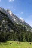 Cudowni widoki dolomity, Włochy Zdjęcie Royalty Free