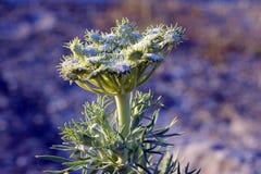 Cudowny świat rośliny obrazy royalty free