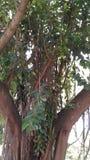 Cudowny drzewo Zdjęcie Stock