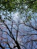 Cudowny drzewo przegląd obrazy royalty free