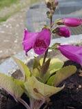 cudowny flower obraz royalty free