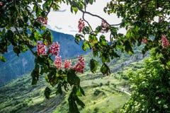 Cudowny France alps denny krajobraz z uroczymi domami, drzewami i górami w tle przy rankiem, zdjęcie royalty free