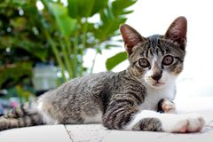 cudowny kota obrazy royalty free