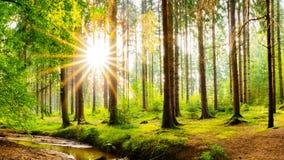 Cudowny las w jaskrawym świetle słonecznym fotografia stock