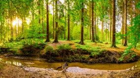 Cudowny las w jaskrawym świetle słonecznym zdjęcia stock