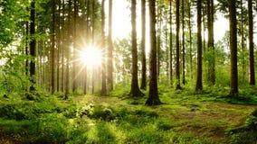 Cudowny las w jaskrawym świetle słonecznym obraz royalty free