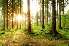 Cudowny las w jaskrawym świetle słonecznym zdjęcia royalty free