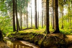 Cudowny las w jaskrawym świetle słonecznym fotografia royalty free