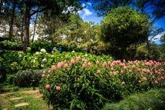 Cudowny Mały menchii i Białych kwiatów dorośnięcie w parku Zdjęcia Stock