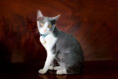 cudowny mojego kota Zdjęcia Stock