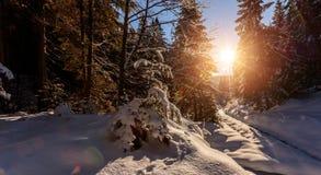Cudowny mro?ny krajobraz Zim halni lasowi mro?ni drzewa pod ciep?ym ?wiat?em s?onecznym malownicza natury sceneria zdjęcia royalty free