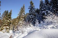 Cudowny mro?ny krajobraz Zim halni lasowi mro?ni drzewa pod ciep?ym ?wiat?em s?onecznym malownicza natury sceneria obrazy stock