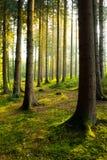 Cudowny ranek w lesie fotografia royalty free