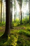 Cudowny ranek w lesie zdjęcie royalty free