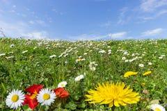 Wiosna kwiaty obraz royalty free