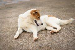 Cudzoziemski trakenu pies obraz stock