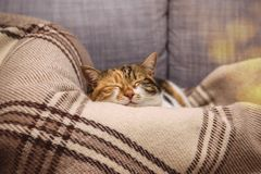Cue cat sleeping on blanket Stock Photography
