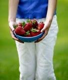 Cueillette de fraise Image stock