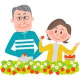 Cueillette de fraise Image libre de droits