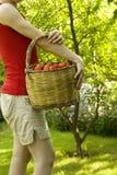 Cueillette de fruit Images libres de droits