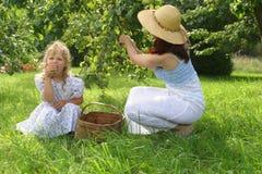 cueillette de pomme Photographie stock