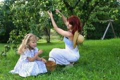 cueillette de pomme Image libre de droits