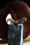 Cueillette et forager de champignon Photo stock