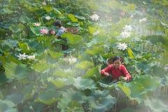 Cueillette Lotus Image libre de droits