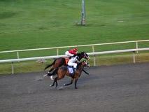 Cuello de la carrera de dos caballos y cuello Foto de archivo libre de regalías