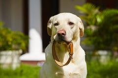 Cuello de perro Fotos de archivo
