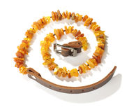 Cuello del animal doméstico de la visión superior ambarina Imagen de archivo