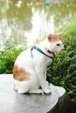 Cuellos y correos lindos del desgaste de los gatos imagen de archivo