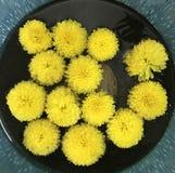 Cuenco amarillo del agua de las flores frescas imágenes de archivo libres de regalías