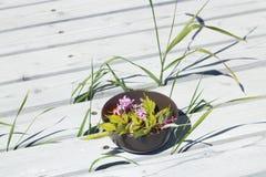 Cuenco con las flores en un patio fotos de archivo libres de regalías