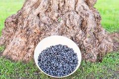 Cuenco de aceitunas negras orgánicas recientemente escogidas, España imagenes de archivo