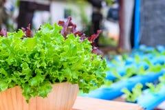 Cuenco de ensalada vegetal Foto de archivo