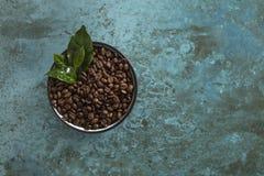 Cuenco de granos de café asados frescos fotos de archivo libres de regalías