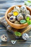 Cuenco de huevos de codornices y de la yema de huevo en la cáscara Fotografía de archivo libre de regalías