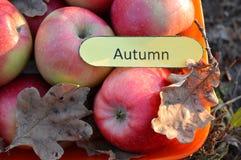 Cuenco de manzanas teniendo en cuenta el sol poniente y el papel con el otoño de la palabra, todavía del otoño vida hermosa imágenes de archivo libres de regalías